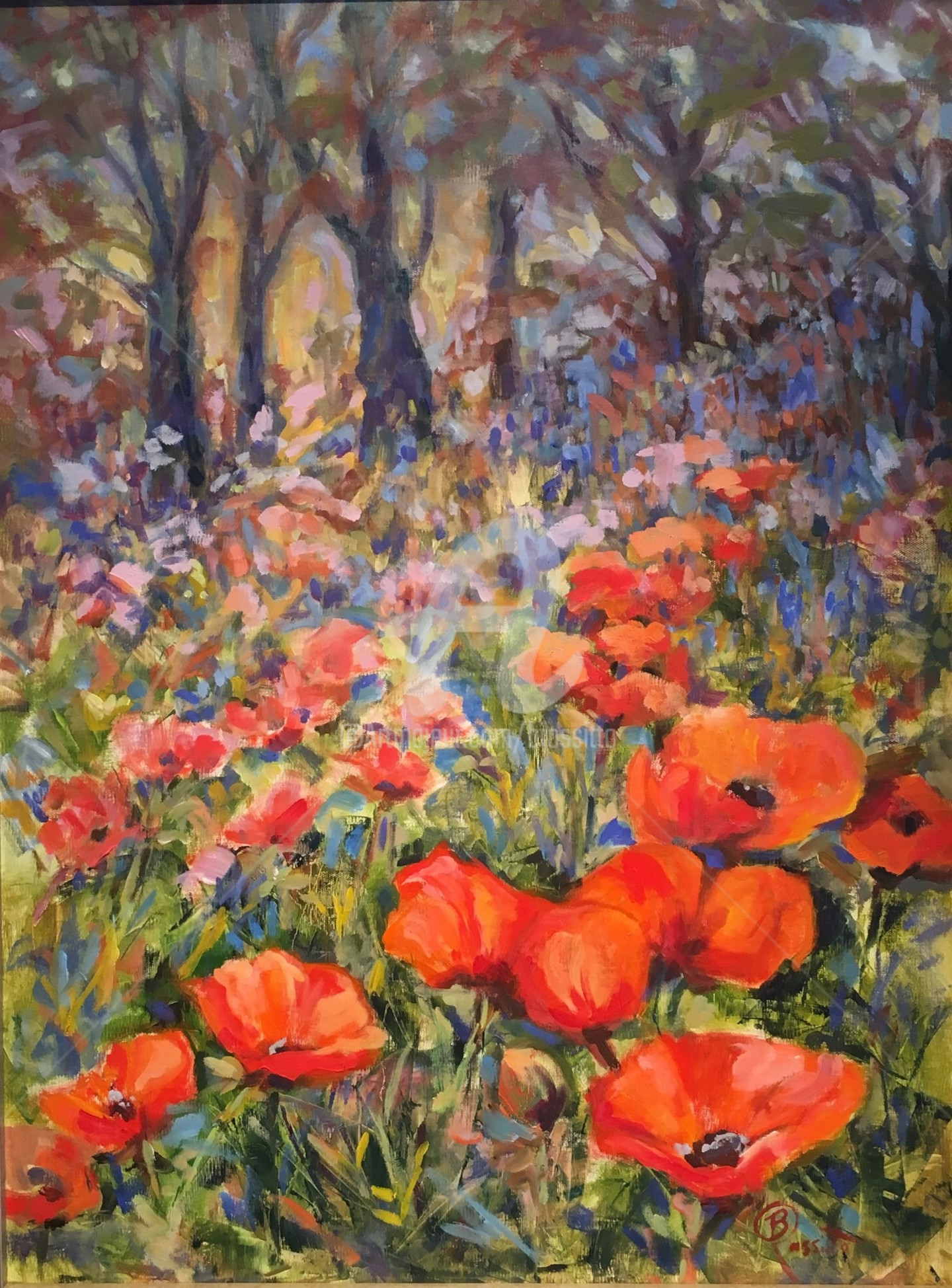 B.Rossitto - Lake Placid Poppies