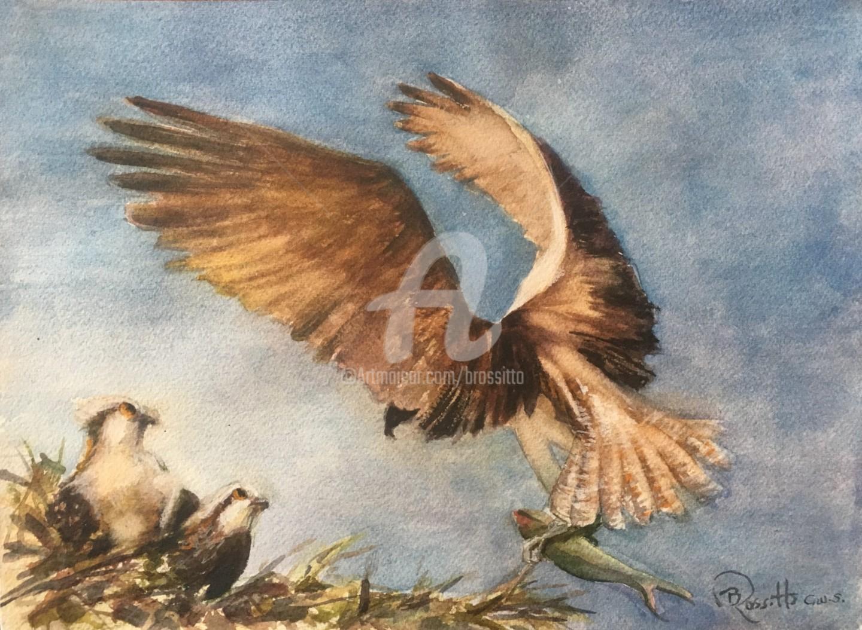B.Rossitto - Osprey Landing