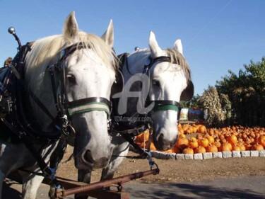 Horses and Pumpkins