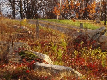 Atop Belltown Orchards - Rocks and Grasses