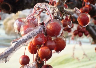 Icing on the Crabapples