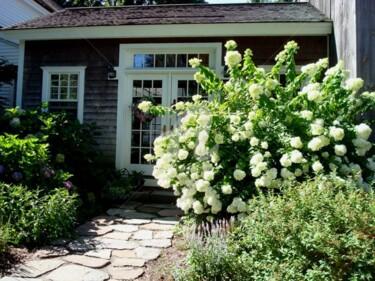 Hydrangeas by the Back Door