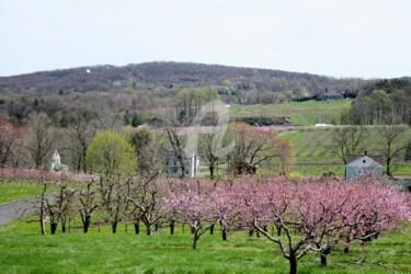 Belltown Orchards Spring 2007
