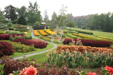 Garden Flowers, Orange and Yellow